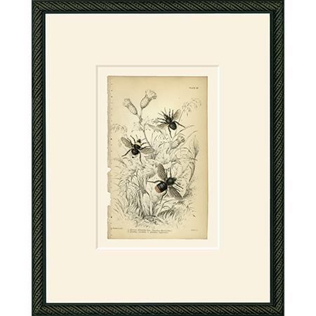 Bee18BSB