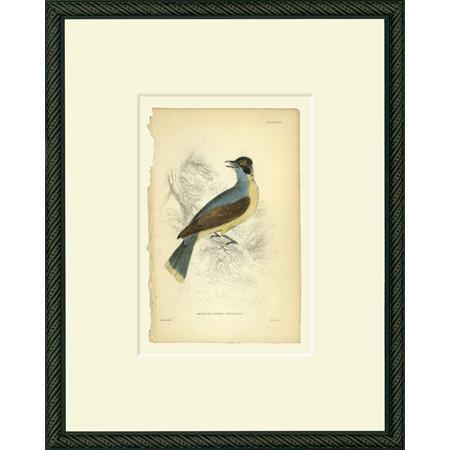 BirdATF26