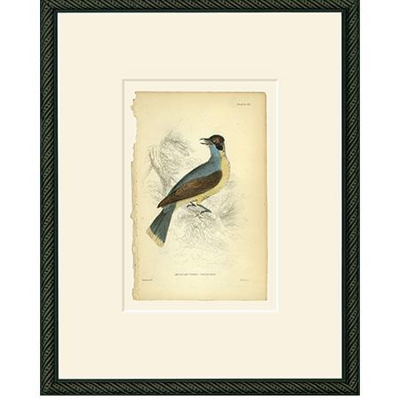 BirdATF26BDB