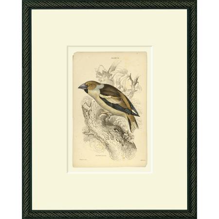 BirdHF15