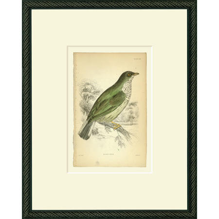 BirdHG25