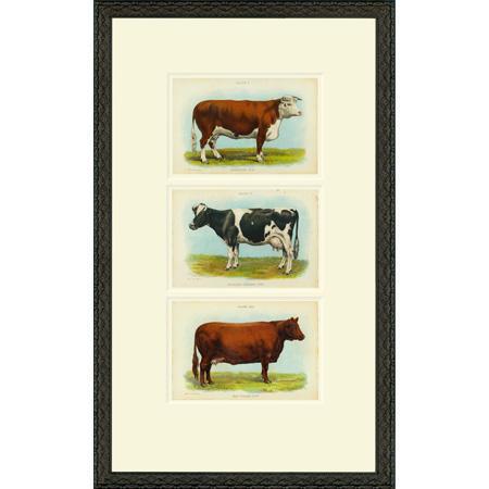 Cow3I1