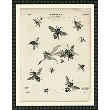 InsectsBeeBdb