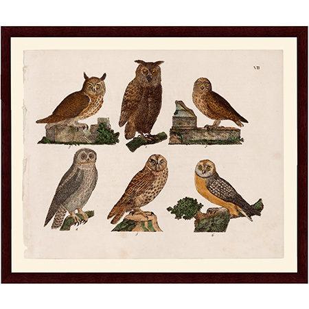 Owls1819LJ22