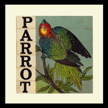 SP26ParrotFr