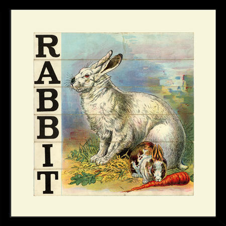 SP26RabbitFr