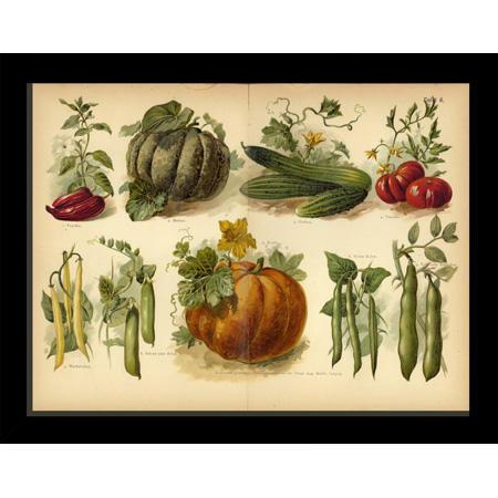 VegetableTaf6Blk