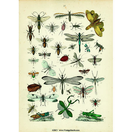 620ColorInsects