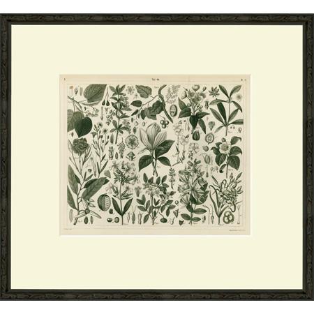 B&W Botanicals