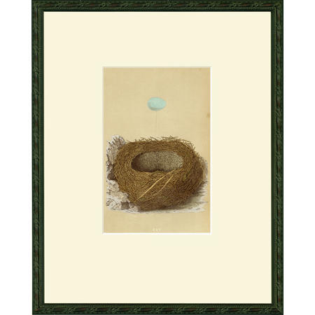 Egg and nest images