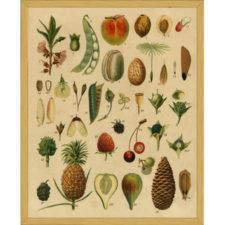 Colored Botanicals