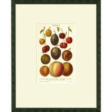 Botanicals - Fruits and Vegetables
