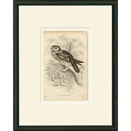 Owl29BDB