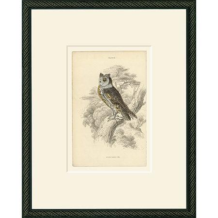 Owl33BDB