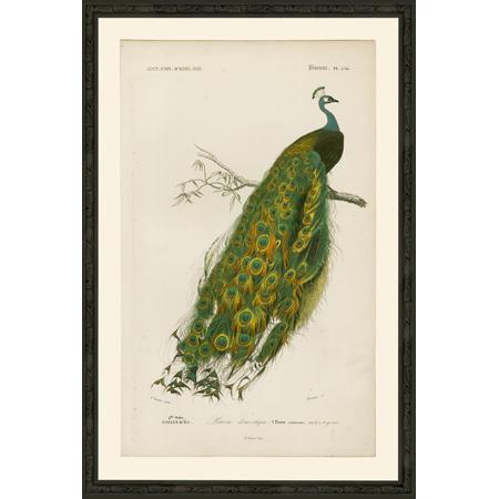 PeacockLgBsp