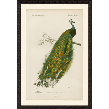 PeacockSmBee