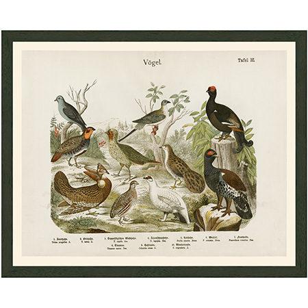 Vogel32BlueRRBr