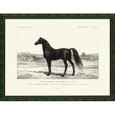 HorseFr