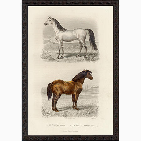 HorseAPBee