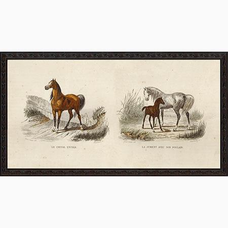 HorsePairBee