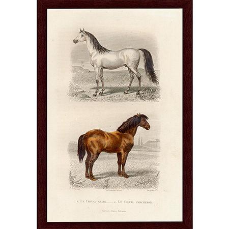 HorsesArabPerchLJ22