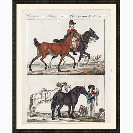 HorsesEFLgBsp