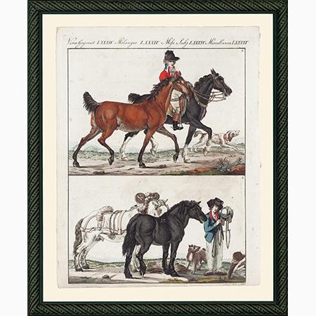 HorsesEFSmBdb