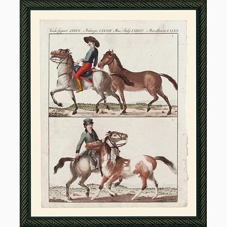 HorsesHPSmBdb