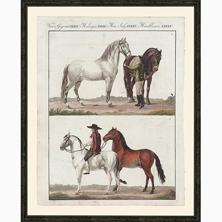 HorsesNSLgBsp