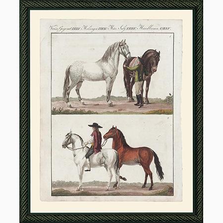 HorsesNSSmBdb
