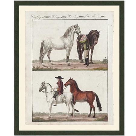 HorsesNeopSpainLgRRBr
