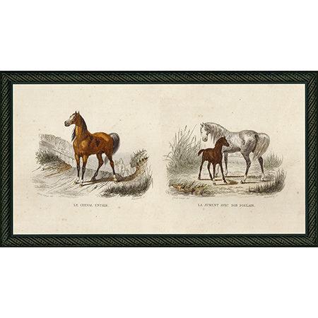 HorsesPairBdb