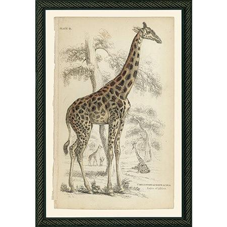 GiraffeBDB