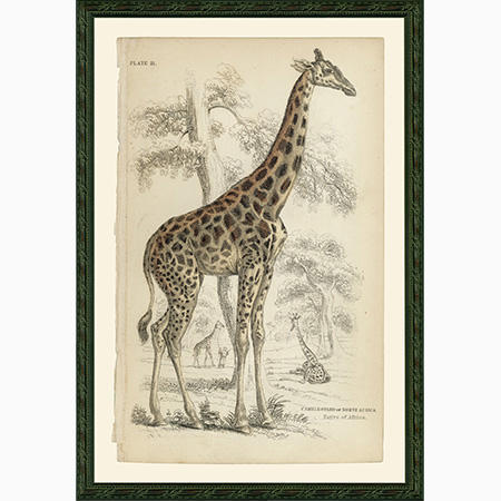 GiraffeTwi