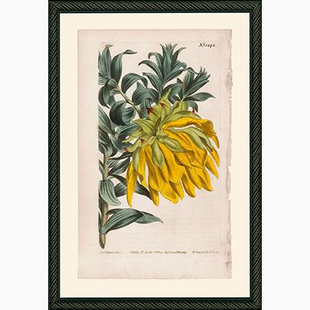 Botanicals - flowers