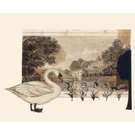 SwanPrince