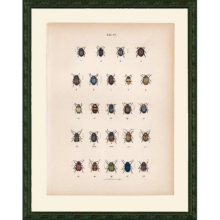 BeetlesBlu45Fr