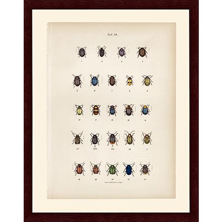BeetlesBlue45LJ22