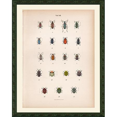 BeetlesGreen42Fr