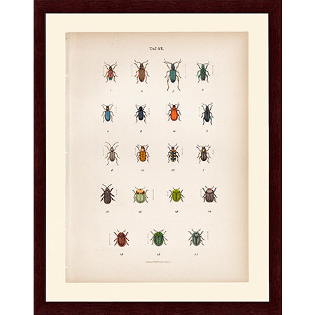 BeetlesGreen42LJ22
