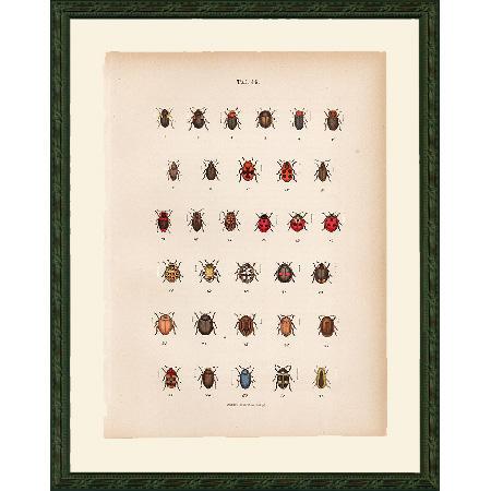 BeetlesRed46Fr