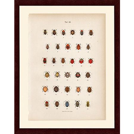 BeetlesRed46LJ22
