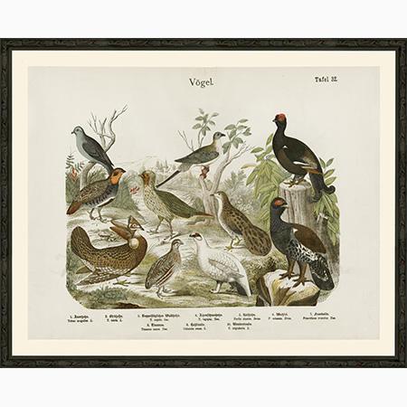 Vogel32BlueFrSm