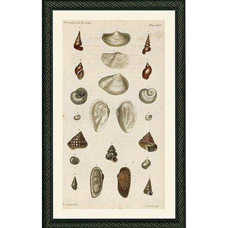 Shells1820Bdb