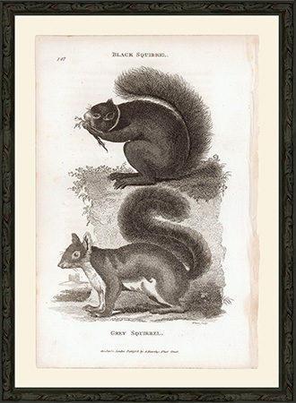 GSSquirrelsBSP9.25x14_Fr300