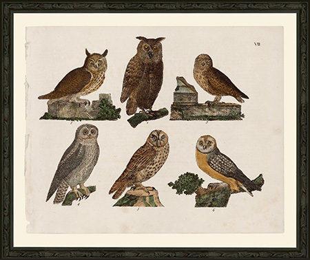 OwlsBSPFr
