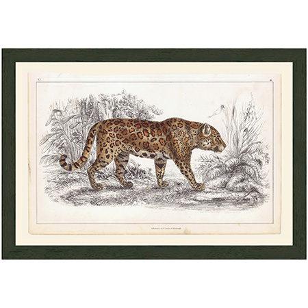 JaguarRRBr