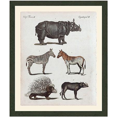 Rhino1799RRBr