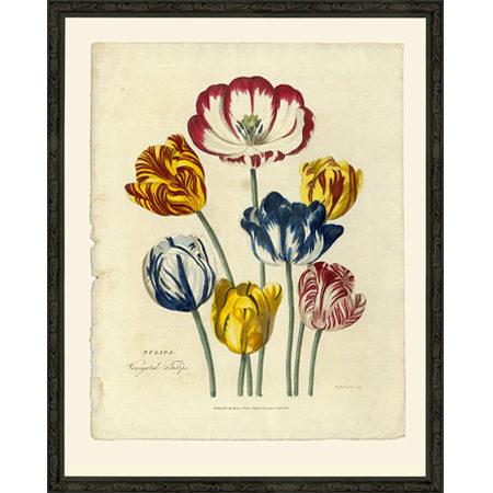 Tulip1819Bsp