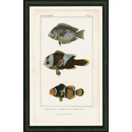 Fish27BDB_150